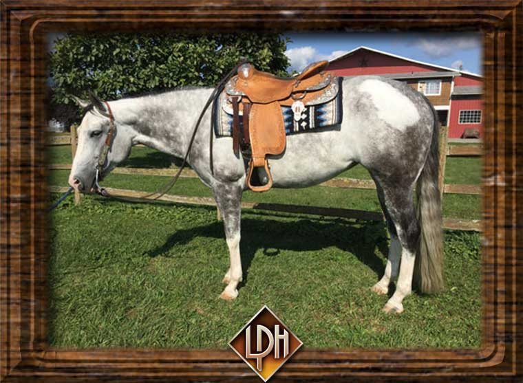 all around western paint mare for sale