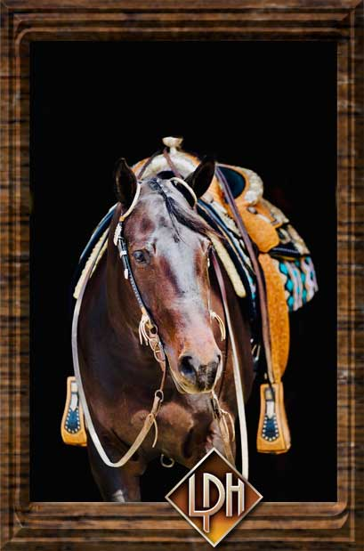 2013 aqha western pleasure show mare for sale2