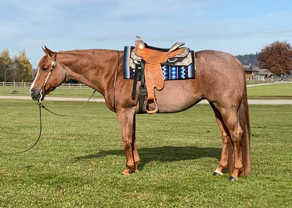 One Good Sister | 2009 AQHA Western Pleasure Mare For Sale
